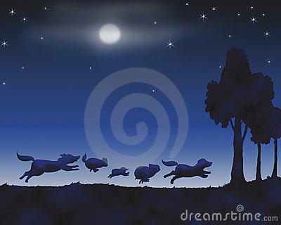 Animals by night