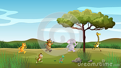 Animals racing at the hill