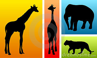 Animals from safari / zoo