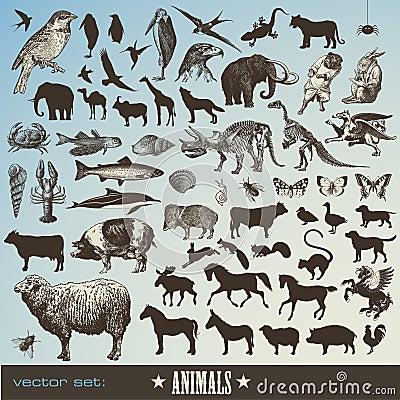 Free Animals Set Stock Photos - 14138263