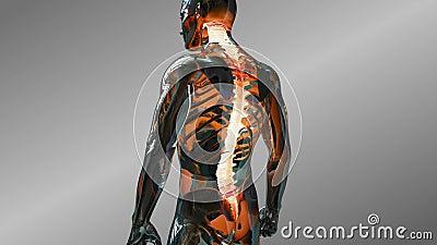 Animation humaine d'anatomie montrant les disques spinaux masculins Balayage vertébral de disque de système squelettique illustration libre de droits