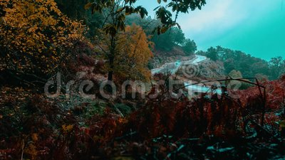 Annaba, Algeria, forest road morning fog time lapse. Time lapse of mountain road surrounded by big forest, autumn trees and foggy rainy blue sky stock footage