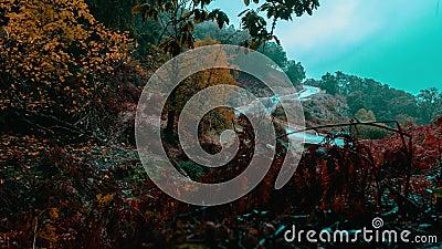 Annaba, Algeria, lasso di tempo della nebbia di mattina del sentiero forestale stock footage