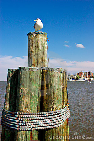 Free Annapolis Harbor Royalty Free Stock Photography - 2084237