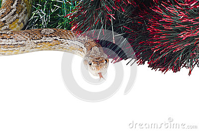 Anno di serpente