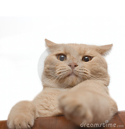 Annoyed cat isolated on white