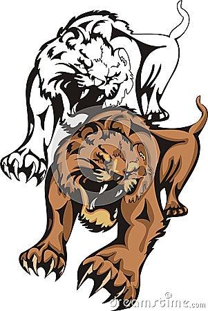 The annoyed shown tigress