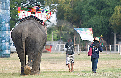 The Annual Elephant Roundup in Surin, Thailand Editorial Stock Photo
