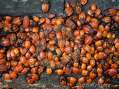 anomalies d 39 insectes en bois image stock image 14979321. Black Bedroom Furniture Sets. Home Design Ideas