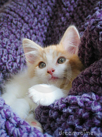 Free Another Adorable Kitten Stock Photo - 309170