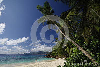 Anse Soleil with beautiful palm tree, Seychelles Editorial Image