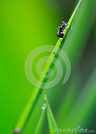 Free Ant Stock Photography - 33006172
