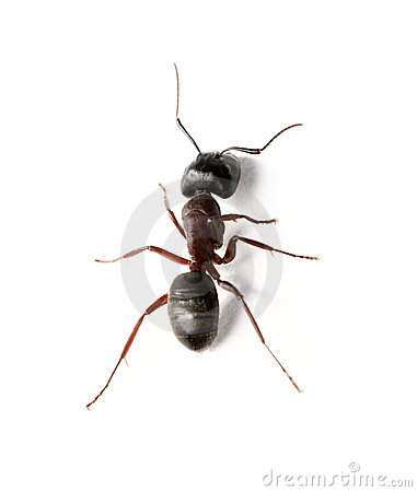 Free Ant Stock Image - 6266901