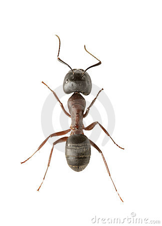 Free Ant Stock Images - 8894064