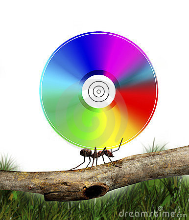 Ant carrying CD