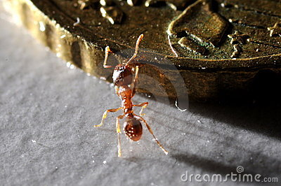 Ant climbing on coin