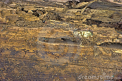 Ant damaged wood board