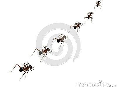 Ant Discipline