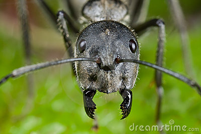 http://thumbs.dreamstime.com/x/ant-face-shot-9667712.jpg