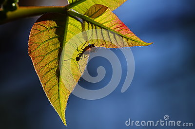 Ant and fresh leaves