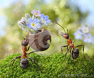 Ant gives flowers with sweets, ants tales