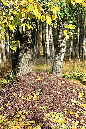 Ant hill.