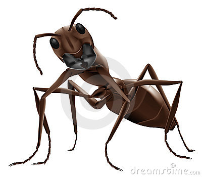 Ant illustration isolated insect
