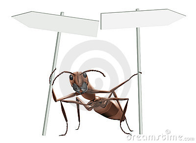 Ant pointing opposite directions
