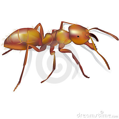 Ant realistic detailed