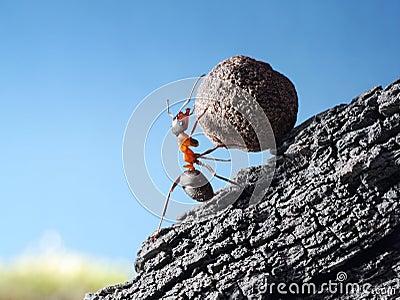 Ant rolls stone uphill