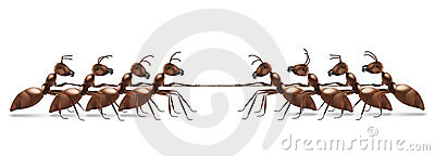 Ant rope pulling business or sport competition