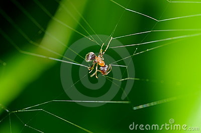 Ant trapped in spider web