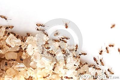 Ant work