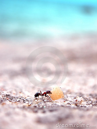 Ant working