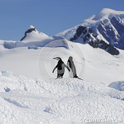 Free Antarctic Coast Stock Image - 136566891