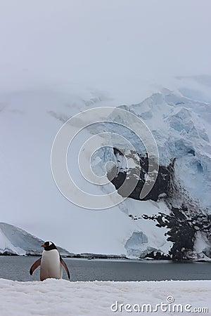 Antarctica penguins stock photo image 53140960 for Antarctica cuisine
