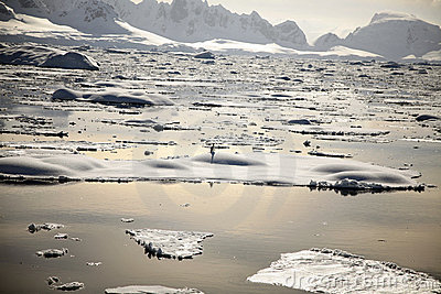 Antarktispingvinsolnedgång