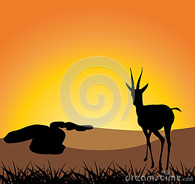 Antelope on a background of sunset