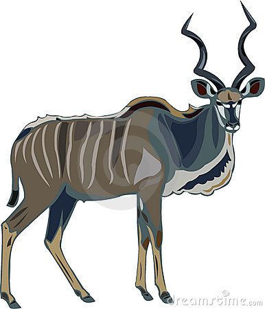 Free Antelope Series Greater Kudu Royalty Free Stock Images - 11554229