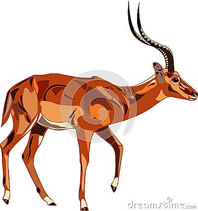 Antelope Series Impala.