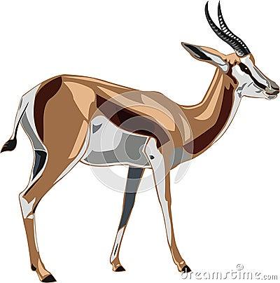 Antelope Series Springbok