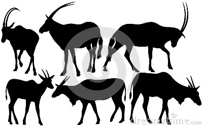 Antelopes vector