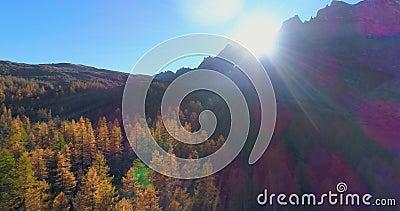 Antena inversa sobre o vale alpino da montanha e madeiras alaranjadas da floresta do larício no outono ensolarado Colorido exteri vídeos de arquivo