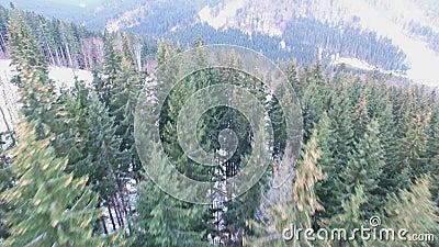Antena, panorama do zangão da floresta do inverno filme