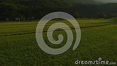 Antenne: Landwirt geht durch Wiese stock footage