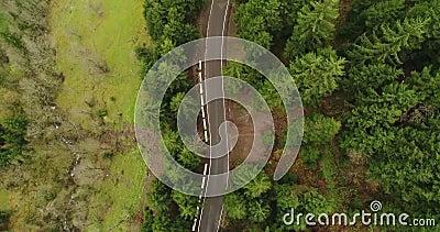 Antenne: Motiemening over weg het uitspreiden door wilde bos4k stock video