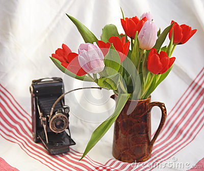 Antique Camera and tulips