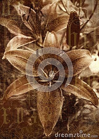 Antique Sepia Flower Photo