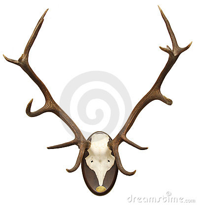 Antlers of a stag