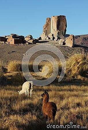 Free Antofagasta De La Sierra, Northwest Argentina Stock Photo - 40384330